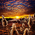 Heaven and Earth Print by Phil Koch