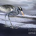 Heron taking his afternoon Beach walk Poster by Danuta Bennett