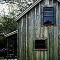 Historic Shed Print by Mg Rhoades