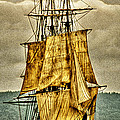 HMS Bounty Poster by David Patterson