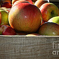 Honey Crisp Poster by Susan Herber