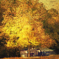 Horse Barn In The Shade Print by Kathy Jennings