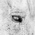 Horse Eye Print by Darren Fisher