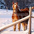 Horse in the snow Poster by Martin Rochefort