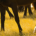 Horses Grazing Poster by Donovan Reese