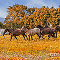 Horses Running Free Print by Susan Candelario