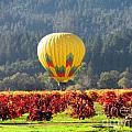 Hot Air in the Valley Poster by Gail Salituri