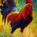 Hot Shot - Rooster Print by Marion Rose