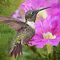 Hummingbird and Petunias Print by Bonnie Barry
