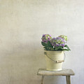 Hydrangea Resting On Stool Poster by Paul Grand Image