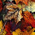 I LOVE FALL 2 Poster by Joanne Coyle