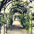 Irish Archway Print by Linde Townsend