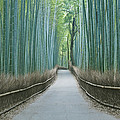 Japan Kyoto Arashiyama Sagano Bamboo Print by Rob Tilley