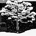 Japanese Tree in the Snow Print by Dean Harte