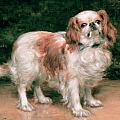 King Charles Spaniel Print by George Sheridan Knowles
