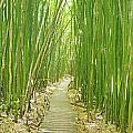 Kipahulu Bamboo Forest Poster by Quincy Dein - Printscapes