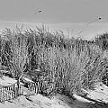 Kites Over Dunes - Jersey Shore Print by Angie Tirado