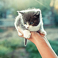 Kitten In Hand, 2010 Print by Emily Golitzin