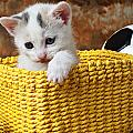 Kitten in yellow basket Poster by Garry Gay