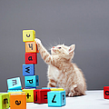 Kitten Playing With Building Blocks Poster by Martin Poole