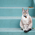 Kitty On Blue Steps Print by Lauren Rosenbaum