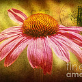 La fleur Print by Angela Doelling AD DESIGN Photo and PhotoArt