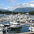 Large marina in Vancouver BC Canada. Poster by Gino Rigucci