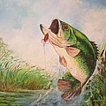 Largemouth bass Print by Jose Lugo