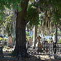 Laurel Grove Cemetery - Savannah Georgia Print by Randy Edwards