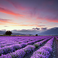 Lavender Field Poster by Evgeni Dinev Photography