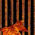 Leaf in drain Print by Carlos Caetano