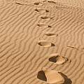 Leave only Footprints Print by Heather Applegate