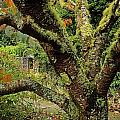 Lichen Covered Apple Tree, Walled Print by The Irish Image Collection