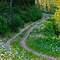 life is a journey on a road lined with daisies Print by Karon Melillo DeVega