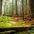 Light in the Forest Print by Idaho Scenic Images Linda Lantzy