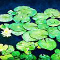Lily Pads and Lotus Print by Tammy Wetzel