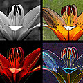 Lily Quartet Print by Judi Quelland