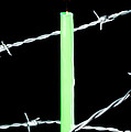 Lit candle surrounded by barbed wire Poster by Sami Sarkis