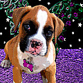 Little Boxer Butterfly Print by Tisha McGee
