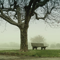 Lonely Bench Beneath Tree In Winter Print by Gil Guelfucci
