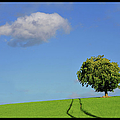 Lonely Tree Against Blue Sky Print by ernie watchorn