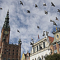 Long Market With Pigeons, Town Hall Print by Keenpress