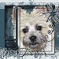 Look in Her Eyes - Cairn Terrier Print by Renae Laughner