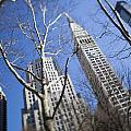 Looking Up Through Trees At Skyscrapers Print by Axiom Photographic