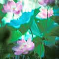 Lotus--Ethereal Impressions ii 20A1 Print by Gerry Gantt