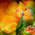 Love Among The Hibiscus Poster by Carol Cavalaris