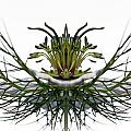 Love in a Mist Poster by Jean Noren