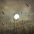 LOVERS MOON Print by Tom York Images