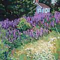 Lupine Cottage in Maine Poster by Hillary Gross