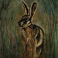 Mad March Hare Print by Lynn Hughes